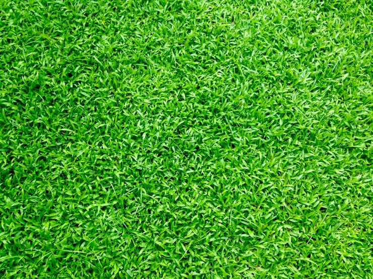 Photo of green grass by Gravitylicious.com from Pexels